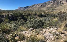 Uncovering the botanical history of the Guadalupe Mountains